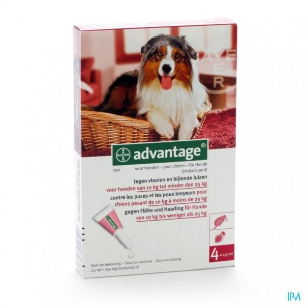 ADVANTAGE 250 HONDEN 10<25KG 4X2,5ML